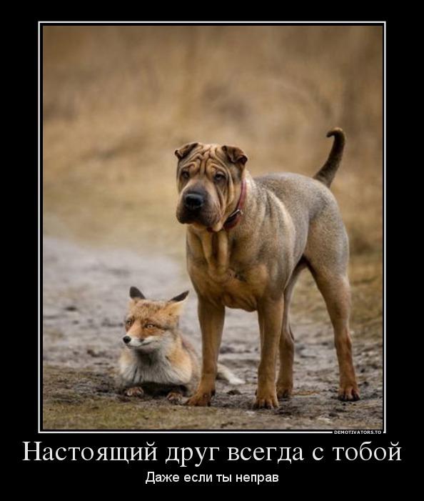 картинка настоящий друг это тот